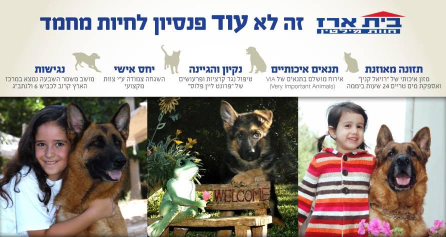 בית ארז - לא עוד פנסיון לכלבים